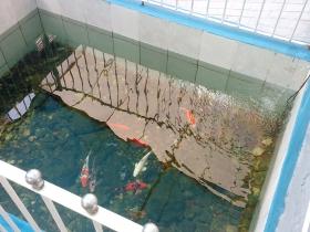 Entrada aquário